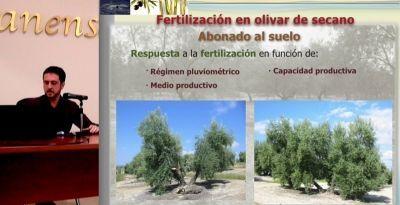 fertiilzación del olivar